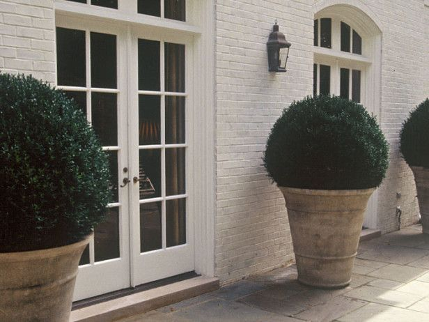 17 best ideas about American Boxwood on Pinterest | Outdoor potted ...