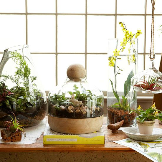 Mix and match a collection of terrariums and vases. Love this beautiful way to bring some life into your decor.
