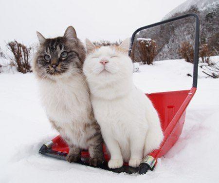 ママさんダンプの上のしろとのら - かご猫 Blog