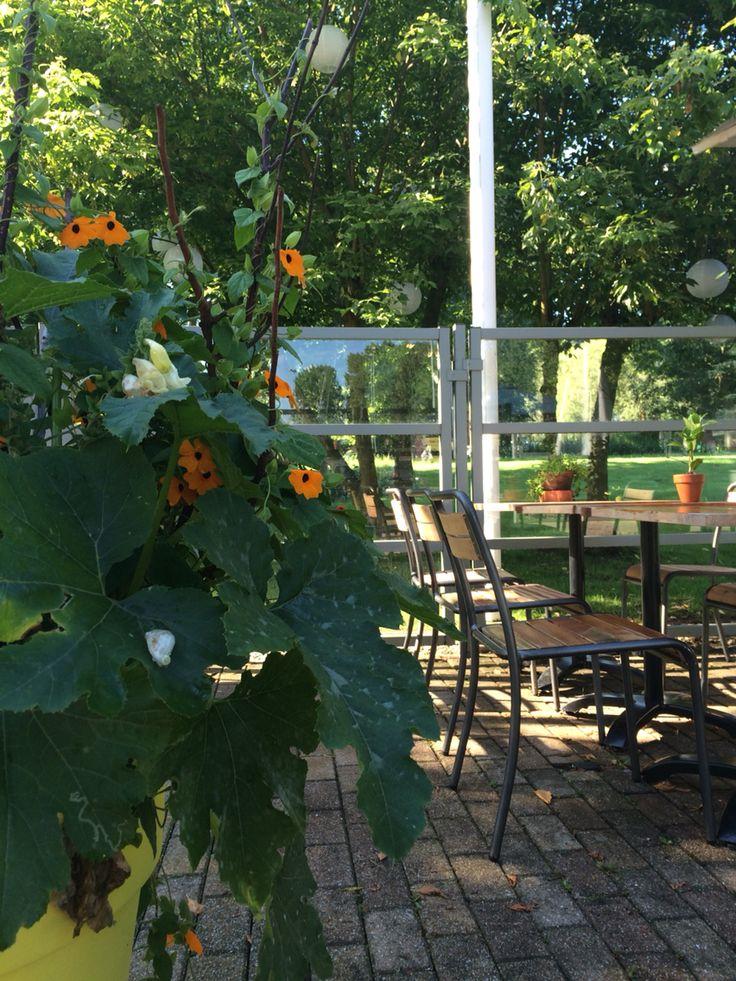 Outside's green aswel ...#terrace