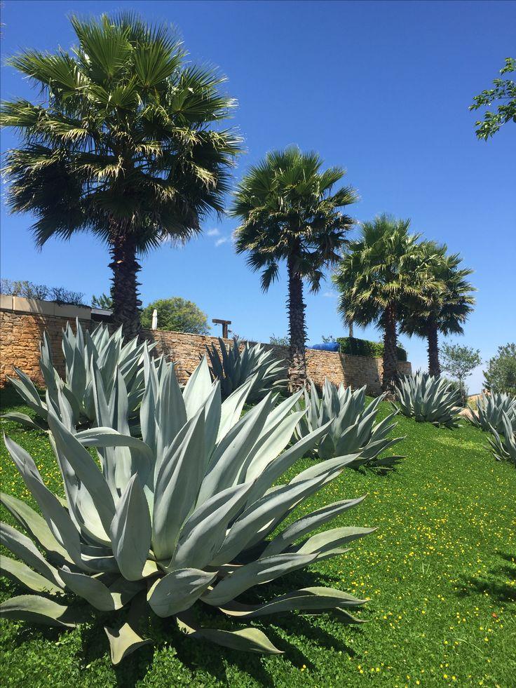 91 mejores im genes sobre taludes en pinterest plantas y for Jardin 81 treinta y tres