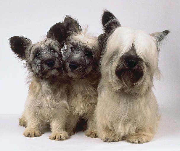 So cute! Although I would keep their hair short!!