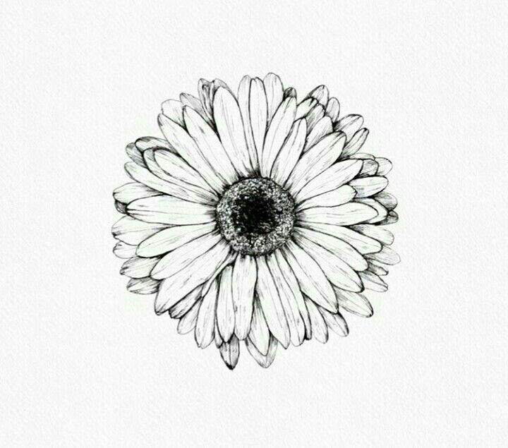 волнения, цветы герберы рисунки карандашом интернет-общении надо