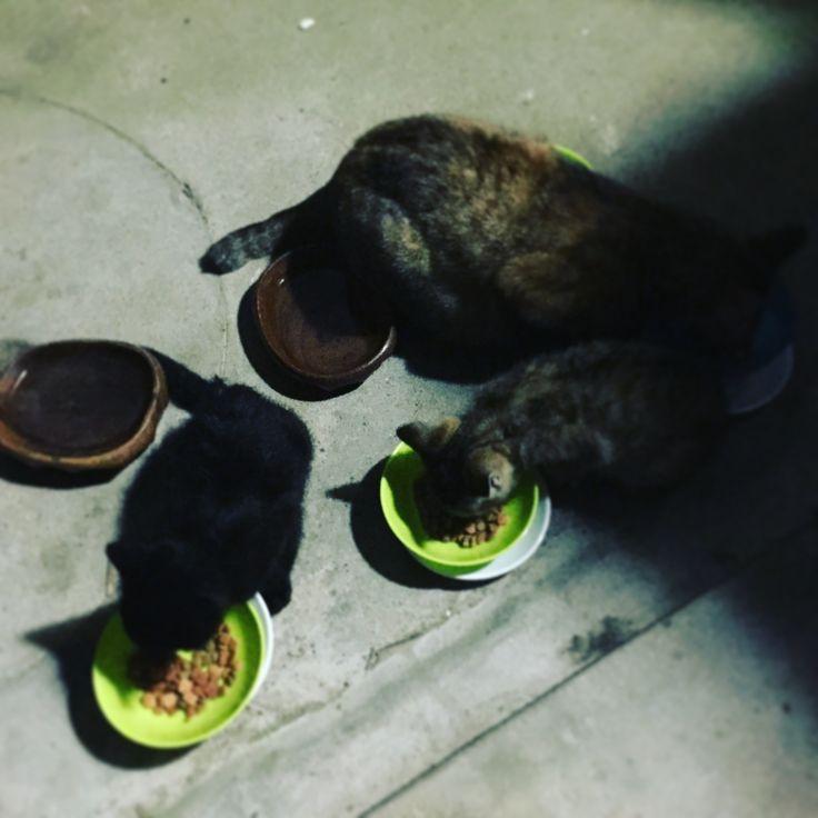 Dinner time  :-)