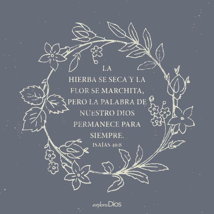 La hierba se seca y la flor se marchita, pero la palabra de nuestro #Dios permanece para siempre. -Isaías 40:8 #Jesus #Amén #Fe #Biblia #Jesucristo #Señor #Diosesbueno #Orar #Cristo #Evangelio #Bendiciones #Amor #Salmos #ORACIONES #Espíritu #Gracias #EspírituSanto #GraciasDios #Palabra #ExploraDios