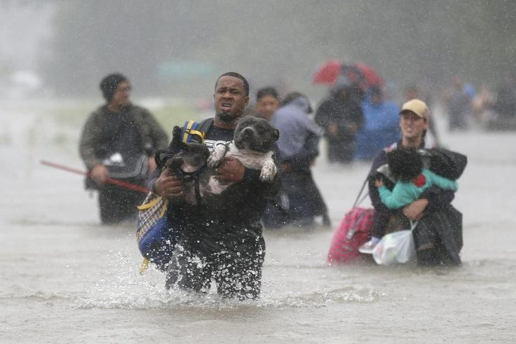 Many Texans grabbed not only their valuables but also the dogs, cats, birds and other pets as they fled the flooding caused by Tropical Storm Harvey.