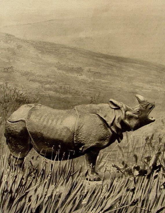 Curiosité de Noël  école  rhinocéros  animaux par SomeVintagePapers, €5.00