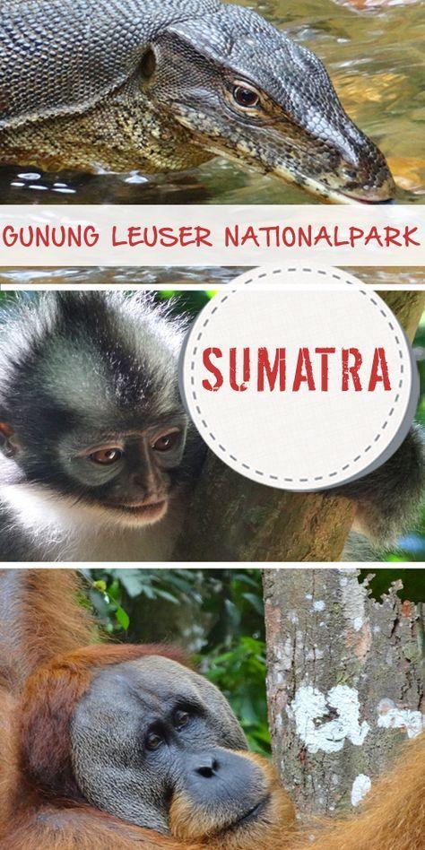 Urang Utans auf Sumatra zu besuchen ist ein Muss b…