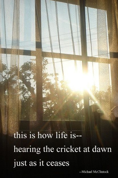 Haiku poem: this is how life is--  by Michael McClintock.