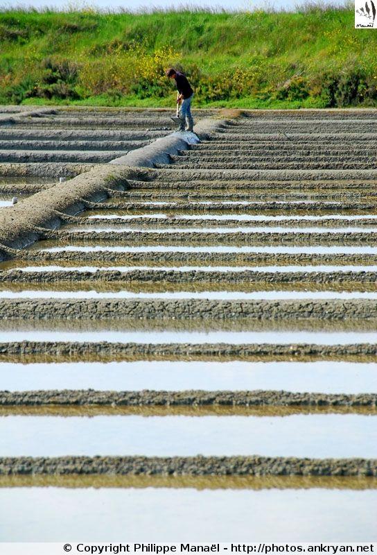 Marais Salant Du0027Ars En Ré (Île De Ré / Charente Maritime)