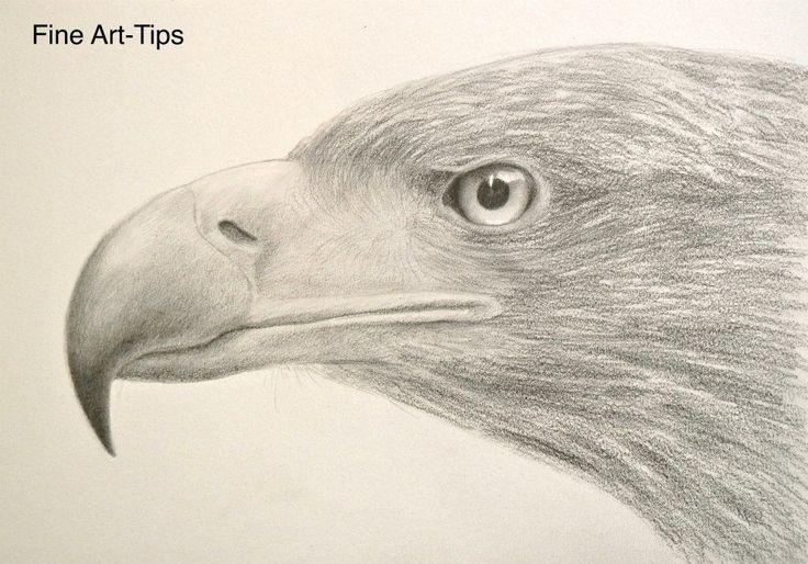 How to Draw a Realistic Eagle Head - Drawing Textures #art #drawing #Finearttips #eagle #artistleonardo #tutorial #LeonardoPereznieto  Take a look to my book here: http://www.artistleonardo.com/#!ebooks-english/cswd