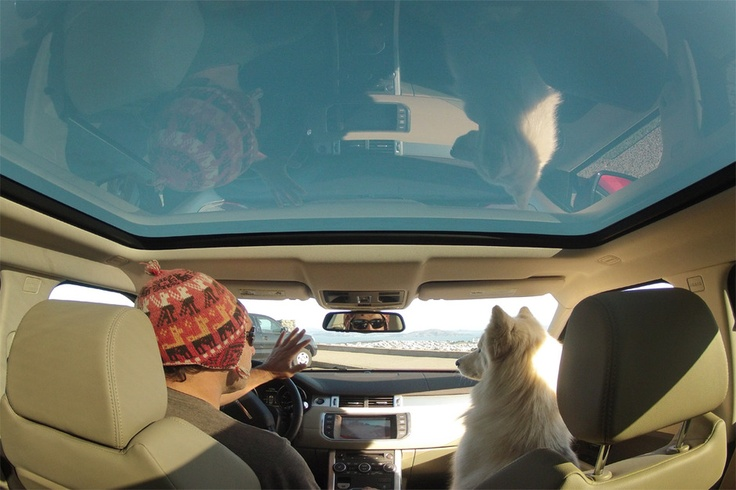 Land Rover USA Tumblr Photographer Jayms Ramirez takes his dog Lulu on a road-trip through the San Francisco Bay Area in a Range Rover Evoque. #LandRover #RangeRover #RangeRoverEvoque #LandRoverPets