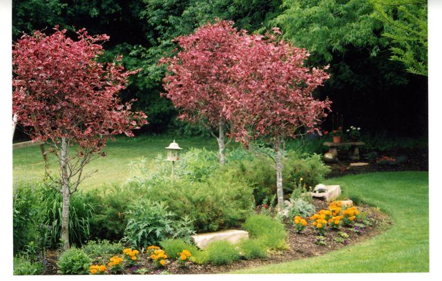 beech tree coloring pages - photo#35