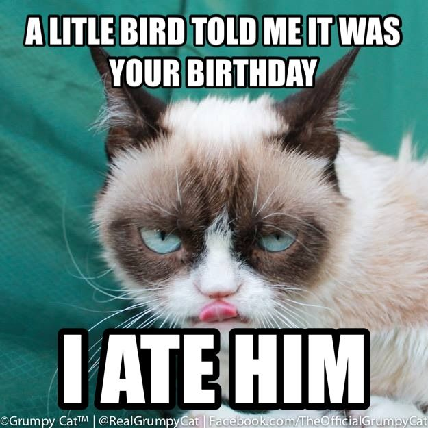 Since my birthday is in eight days, I figured I should show you guys a Grumpy Cat: Birthday edition.