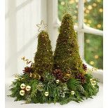 It's a whole new take on the classic Christmas tree! Fresh sheet moss is formed into the shape of two contemporary trees and set on a base of fragrant Christmas greens. Accented with a mix of realistic pinecones, glittery ornaments and beaded wire, then topped off with golden stars, this unique and modern beauty is an eye-catching surprise for all the special people on your gift list.