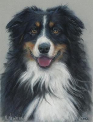 Fyre: The first one is a pastel painting of my own Sam when he was about 5 or 6 months old.  It was my first pastel painting of an Aussie and I have done a few