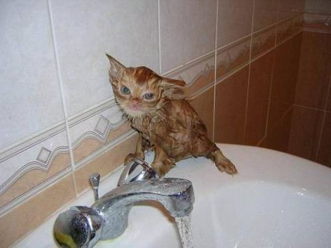 Fórum: Vicces állatos fotók mindenhonnan topic   femina.hu