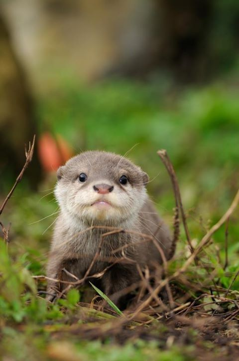 Cute baby otter coming at ya! - http://humorandfail.com/cute-baby-otter-coming-at-ya/