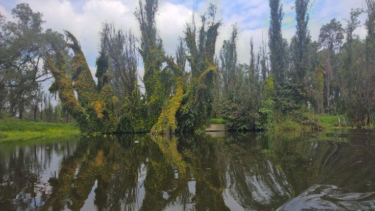 Cosa vedere a Città del Messico: la zona lacustre di Xochimilco. Scopri di più: http://viagging.it/citta-del-messico-5-cose-sapere/