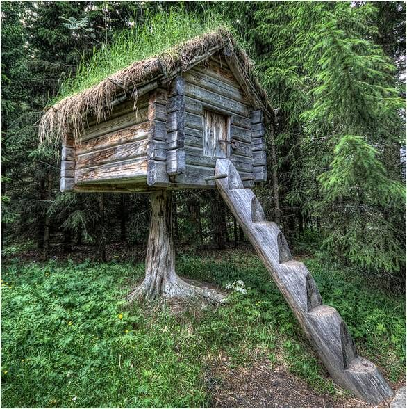 Swedish food storage shed built on a tree stump log for Houses built in trees