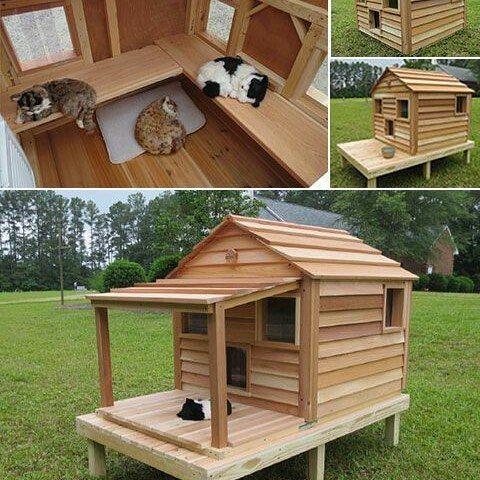 Isso é que se chama de casa de gatos!