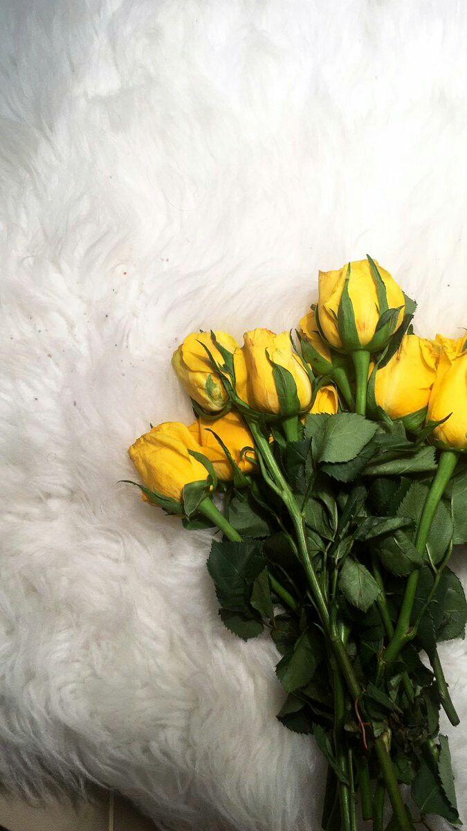 Pin By افراح محمد On الاصــفر الجميل Yellow Flower Pictures Flower Photos Beautiful Red Roses