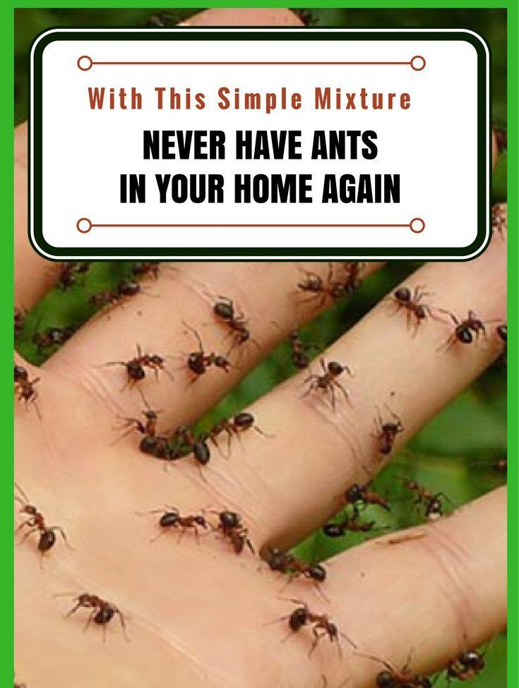 Make This Natural Diy Ant Repellent Solution To Never See Ants In Your Home Ever Again Ant Repellent