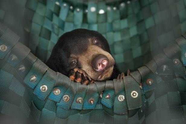 The Most Uplifting Photos of 2014A sun bear takes a nap in one of Free The Bears' hammocks at the Phnom Tamao Wildlife Rescue Center, Sep. 5, 2014.