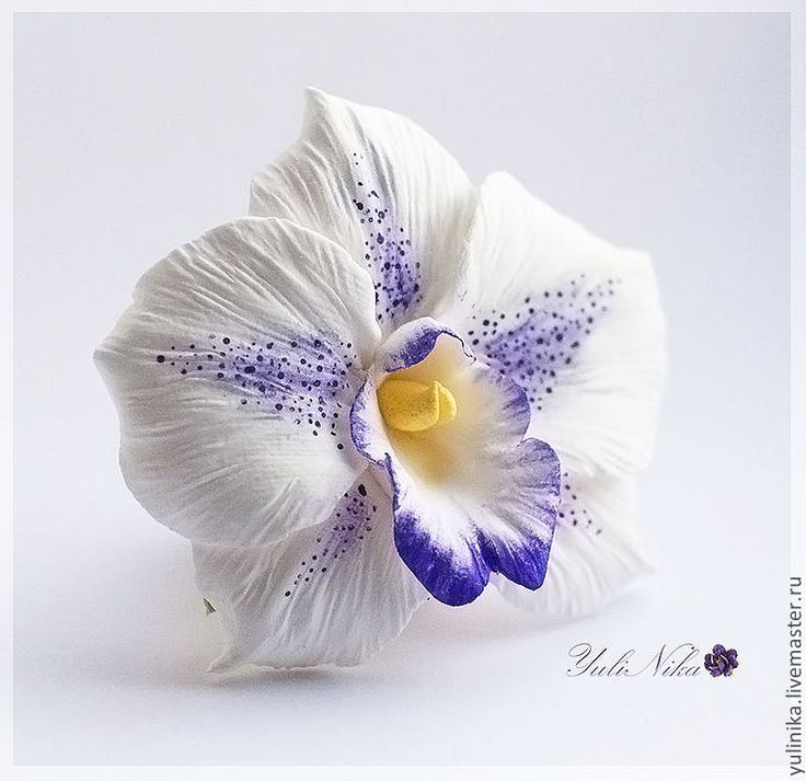 orchid- clay