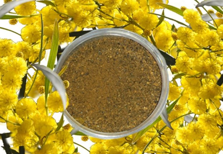 Natural Face Scrub – Native Natural Skincare – Acacia victoriae cleans all types of skin and its  high levels of amino acids help promote younger looking skin. Ground wattle seed acts as a gentle exfoliator to remove the top layer of dead skin. For extra exfoliation, Fruit Acid Complex (with Bilberry Extract, Sugar Cane Extract, Sugar Maple Extract, Orange Extract, Lemon Extract) has also been added to make the skin look even younger and fresher. The product has a... #naturalfacescrub