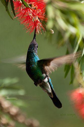 La mejor de las aves! sorprendentemente hermoso