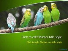 10297-parrots-ppt-template-0001-1
