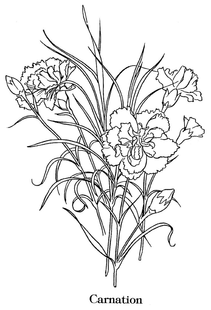 Carnation flower coloring pages - Find Parts Of Your Perfect World On Indulgy Keep Them For Yourself And Share To Others Carnations By Michael