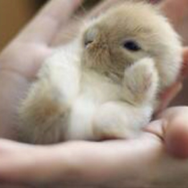Smallest little baby bunny in the world. Totally the cutest thing ever!