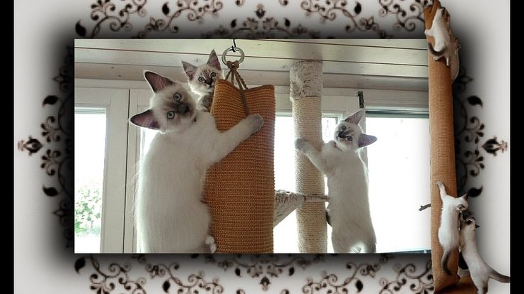Catify the home:Sisalteppich wird Klettersack.Hanging cat tree made ...