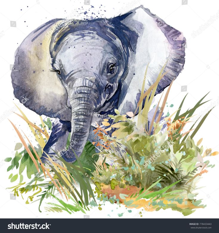 Baby Elephant Wild Animals Watercolor Illustration Stock Illustration 778433443
