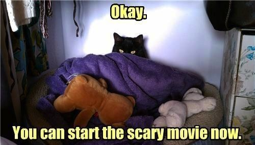 LMAO!: Cat, Funny Animal Pictures, Funny Pictures, Inspiration Pictures, Funny Quotes, Movie Night, Scary Movie, Horror Movie, Animal Funny
