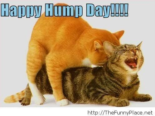 Happy Hump Day wednesday hump day wednesday quotes happy wednesday happy hump day wednesday quote happy wednesday quotes