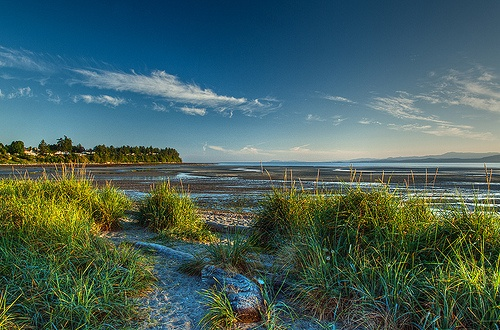 Parksville Bay - Summer Morning