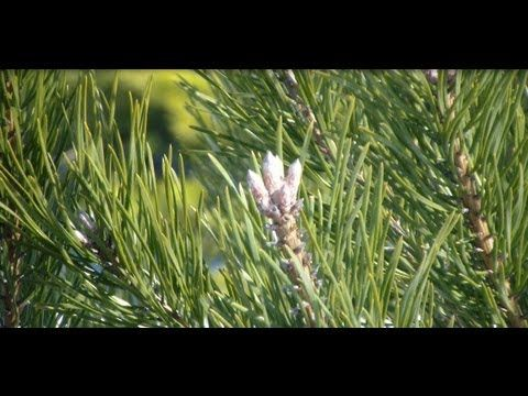 виталий островский травы от паразитов их прием