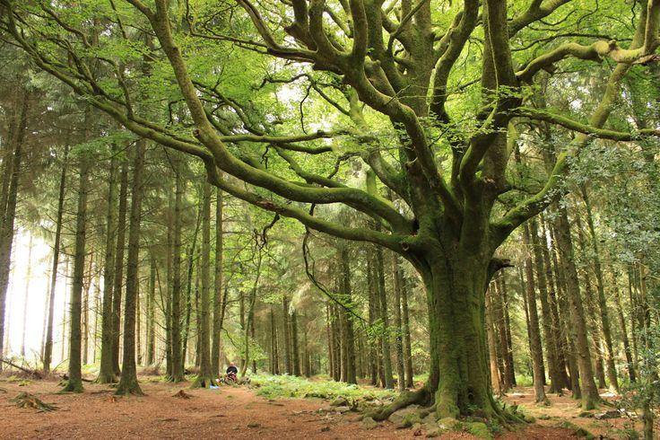 La forêt de Brocéliande : Les 100 plus beaux paysages de France - Linternaute.com Week-end