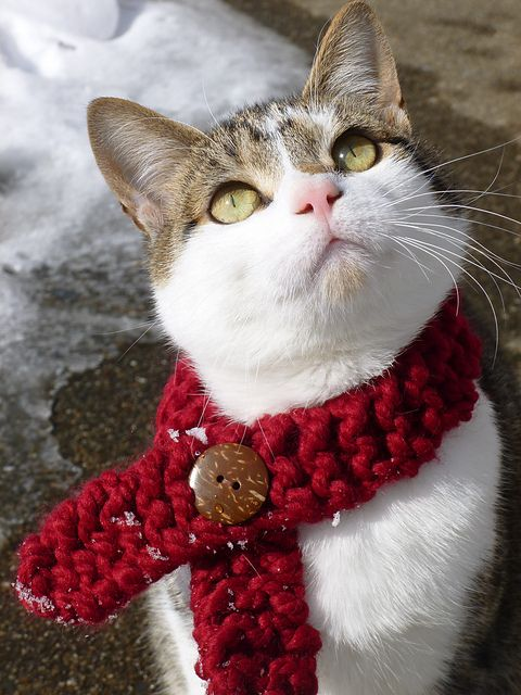 352 best Animals in Knitwear images on Pinterest | Knitwear ...