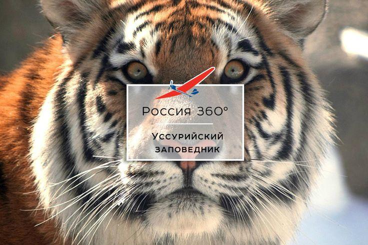 В Уссурийском заповеднике водятся два самых скрытных и самых больших хищника планеты: уссурийский, или амурский, тигр и дальневосточный леопард. К сожалению, в природе их осталось лишь несколько сотен особей. Россия 360°. Дальневосточный федеральный округ.