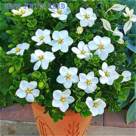 Jasmim é uma das plantas que podem ser cultivadas no escritório para reduzir o estresse