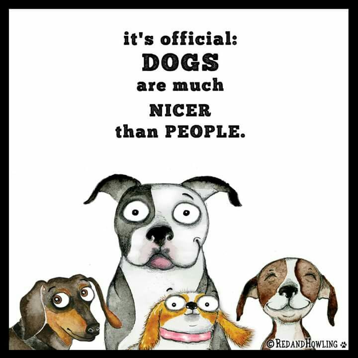Dang right dog quotes funny dog quotes crazy dog