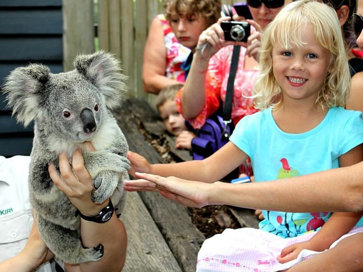 Want to touch a Koala? - Visit the Gold Coast, Australia