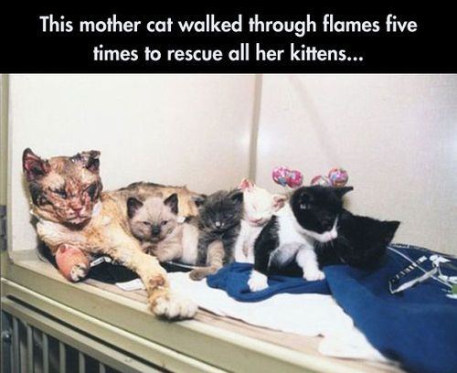 This Mother Cat Walked Through Flames Five Times To Save All Her Kittens Pictures, Photos, and Images for Facebook, Tumblr, Pinterest, and Twitter