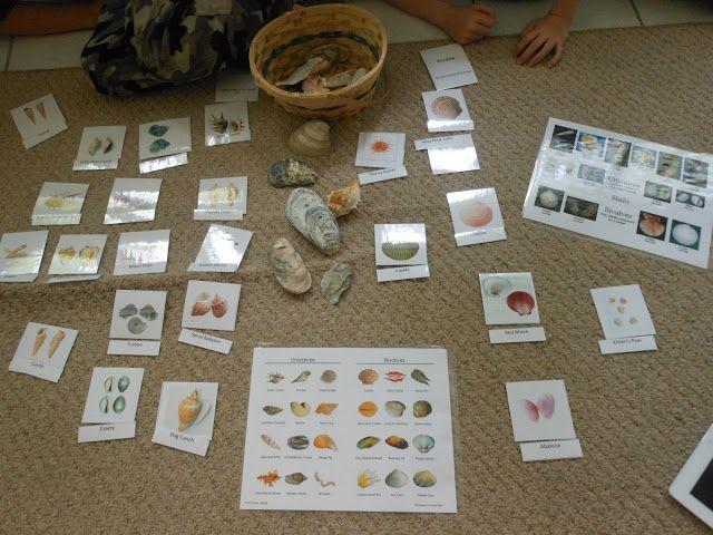 Free Montessori seashell printables and activities.
