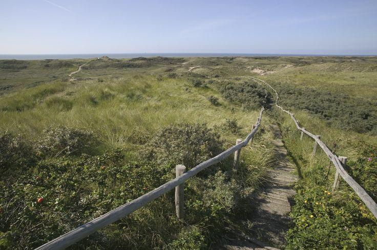 Uitzicht over het Noord-Hollands duingebied bij Egmond.