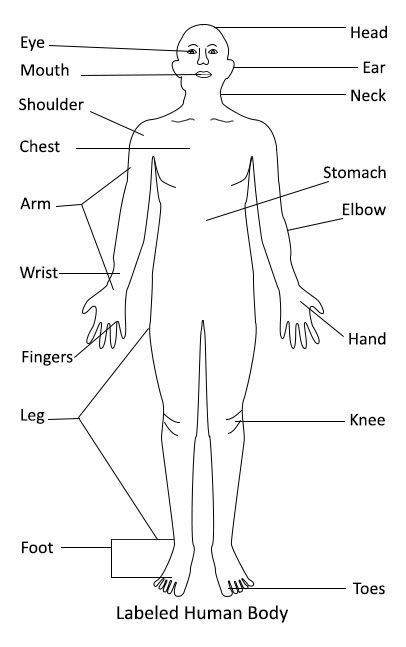 Ozna U010deny Human Body Diagram